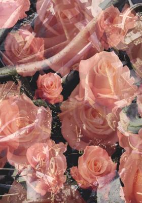 19_2002_Urs_Luthi_Trash_e_Roses